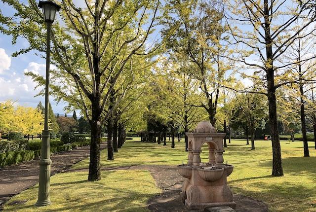 テクノ中央緑地こもれびの並木